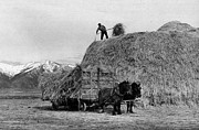 Horse And Cart Art - Loading Hay by Arthur Rothstein