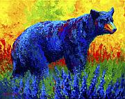 Bears Metal Prints - Loafing in the Lupin Metal Print by Marion Rose