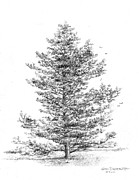 Loblolly Pine Print by Jim Hubbard