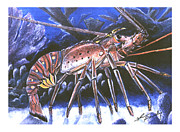 Crawfish Art - Lobster Walking by Shannon Wiley