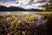 Highlands Photos - Loch Ard From the Reed beds landscape by John Farnan