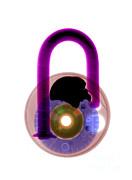 Ted Kinsman - Lock