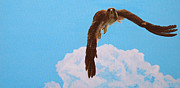 Red-tailed Hawk Paintings - Locked on Taeget by Steve Wilson