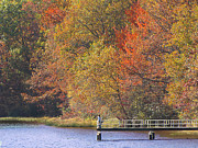 Schuylkill Prints - Locust Lake State Park 2968 Print by David Dehner
