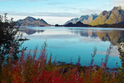 Norwegian Coast Framed Prints - Lofoten Islands Framed Print by Heiko Koehrer-Wagner