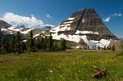 Goats Prints - Logan Pass in Glacier National Park Print by Bruce Gourley