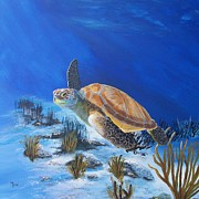 Loggerhead Sea Turtle Print by John Moon