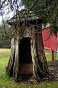 Bruster Photo Prints - Loggers Outhouse Print by Clayton Bruster