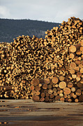 Woodpile Prints - Logs, Merritt, Nicola Country, British Columbia, Canada Print by Ron Fehling