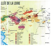 Wine Vineyard Drawings Prints - Loire Valley in France Print by None