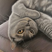 British Shorthair Art - Lola by Dawn Jones