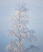 Frost Mixed Media - Lone and Slender by Ari Salmela