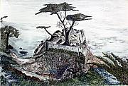 Cypress Tree Drawings - Lone California Tree by Diane Frick