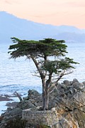 Monteray Bay Framed Prints - Lone Cypress 2 Framed Print by Gerry Fortuna