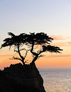 Monteray Bay Posters - Lone Cypress At Sunset Poster by Gerry Fortuna