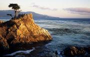 Location Art Metal Prints - Lone Cypress Tree Metal Print by Michael Howell - Printscapes
