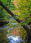 Oak Creek Photos - Lone Duck by Robert Harmon