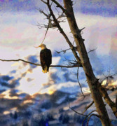 Eagle Paintings - Lone Eagle by Clarence Alford
