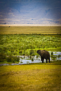 Elephant Grass Framed Prints - Lone Elephant Seeking Water Framed Print by Darcy Michaelchuk