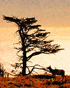 Silhouette Digital Art - Lone Elk of Tomales Bay - Photoart by Wingsdomain Art and Photography