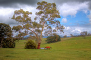 Grazing Horse Originals - Lone Horse Grazing by Mark Richards