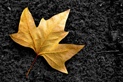 Floor Photo Posters - Lone Leaf Poster by Carlos Caetano