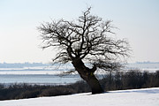 Winter Scene Photo Prints - Lone Oak. Print by Terence Davis