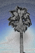 Colored Pencil Metal Prints - lone Palm 2 Metal Print by Gary Brandes