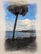 Melbourne Beach Framed Prints - Lone Palm Tree Framed Print by Joan  Minchak