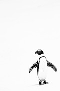 Hillman Framed Prints - Lone Penguin Framed Print by Victoria Hillman