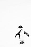 Lone Penguin Print by Victoria Hillman
