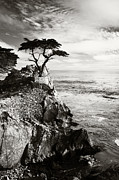 Lone Pine Framed Prints - Lone pine Framed Print by David Cordner