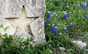 Spring Scenery Art - Lone Star Bluebonnets by Gayle Johnson