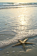 Star Pyrography Acrylic Prints - Lone Star on Lovers Key Beach Acrylic Print by Olivia Novak
