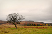 Wark Photo Framed Prints - Lone Tree and Higger Tor Framed Print by Siobhan Brennan-Raymond