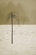 David Gordon - Lone Tree and Winter Landscape