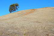 Hayward Art - Lone Tree At Coyote Hills California . 7D10906 by Wingsdomain Art and Photography