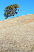 Regional Metal Prints - Lone Tree At Coyote Hills California . 7D10908 Metal Print by Wingsdomain Art and Photography