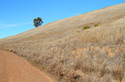 Hayward Art - Lone Tree At End of The Trail At Coyote Hills California . 7D10920 by Wingsdomain Art and Photography