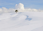 Cold Temperature Art - Lone Tree At Yellowstone National Park by Anita Erdmann