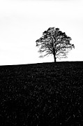 Ultra Wide Angle Lens Posters - Lone Tree Black and White silhouette Poster by John Farnan