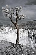 Bryce Canyon Acrylic Prints - Lone Tree Canyon Acrylic Print by Mike Irwin