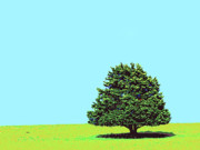 Lone Tree Print by Dominic Piperata