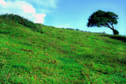 Puerto Rico Photo Prints - Lone Tree Hill  Print by Thomas R Fletcher