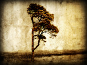 Haze Digital Art Posters - Lone Tree Poster by Julie Hamilton