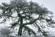 Mary Almond - Lone Tree