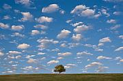 Field. Cloud Framed Prints - Lone Tree Morning Framed Print by Steve Gadomski