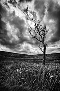 Lone Tree Photo Prints - Lone Tree on the Ayrshire moors Print by John Farnan