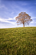 Ultra Wide Angle Lens Posters - Lone Tree on the hill colour Poster by John Farnan