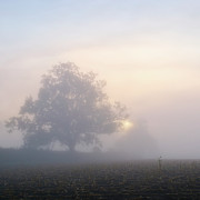 Field. Cloud Prints - Lone Tree Print by Paul Simon Wheeler Photography